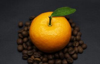 nalewka z pomarańczy i kawy