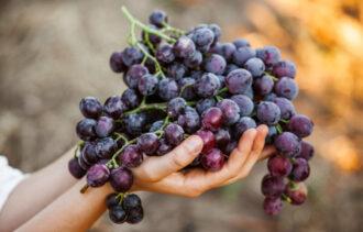 nalewka z winogron ciemnych